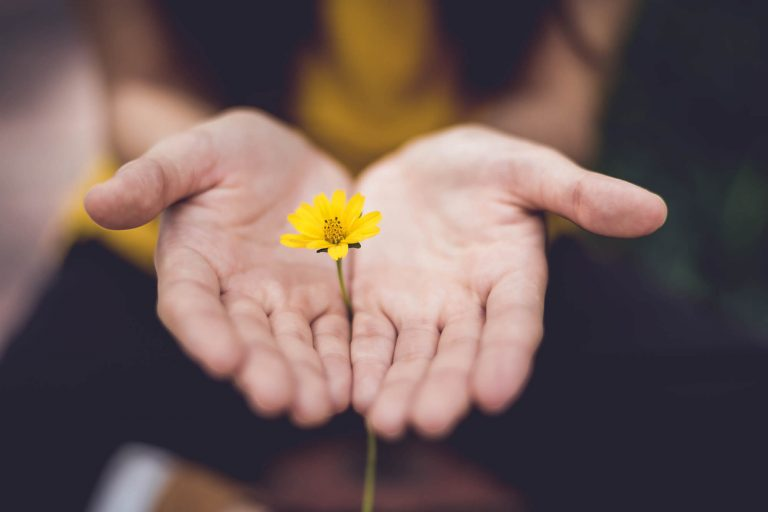 Open hands brought together to hold stem with yellow flower